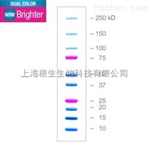 Bio-Rad伯乐双色蛋白Marker 500ul 1610374