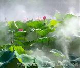厦门雾森景观系统