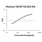 人血管内皮细胞生长因子 ELISA 试剂盒