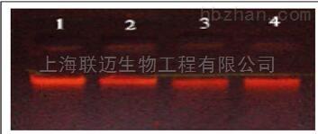 非冻型血液DNA保存液