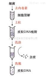 一步法单菌落质粒 DNAout