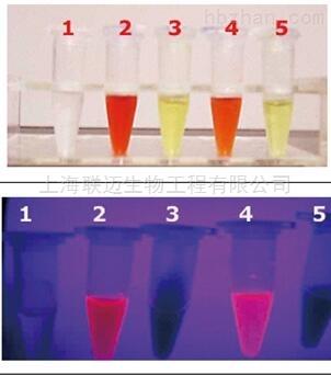溴化乙锭清除剂