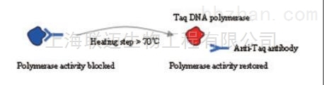 Taq酶抗体