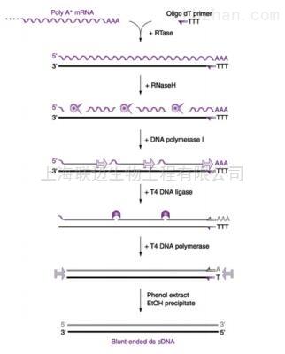 一管式双链cDNA合成试剂盒
