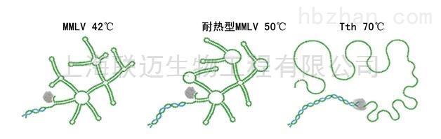 一步式RT-PCR Mix