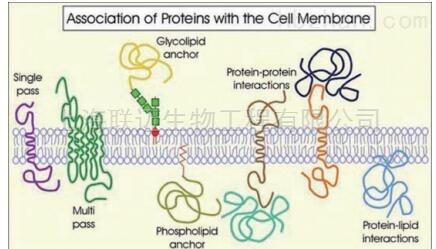 细菌膜蛋白质微量提取试剂盒