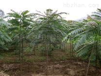 常宁市水松地区土壤治理及生态建设项目