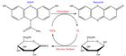 MX5203-1MGADHP(Amplex Red)过氧化氢探针