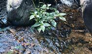陕西神木市秃尾河流域水污染防治工作方案