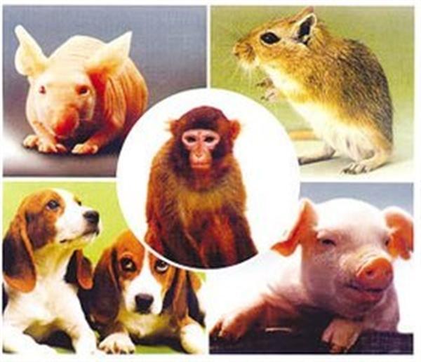 明星实验动物,非小鼠elisa检测试剂盒莫属