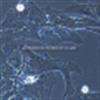 大鼠星形胶质细胞